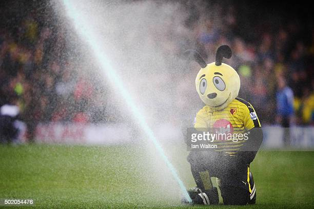 Watford mascot Harry the Hornet plays with a sprinkler prior to the Barclays Premier League match between Watford and Liverpool at Vicarage Road on...