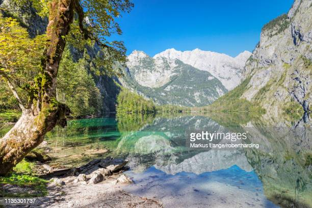 watzmann mountain reflecting in lake obersee, near lake koenigssee, berchtesgadener land, berchtesgaden national park, upper bavaria, bavaria, germany, europe - berchtesgaden national park stock photos and pictures