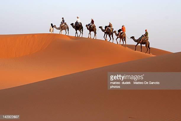 wave crest - chameau photos et images de collection
