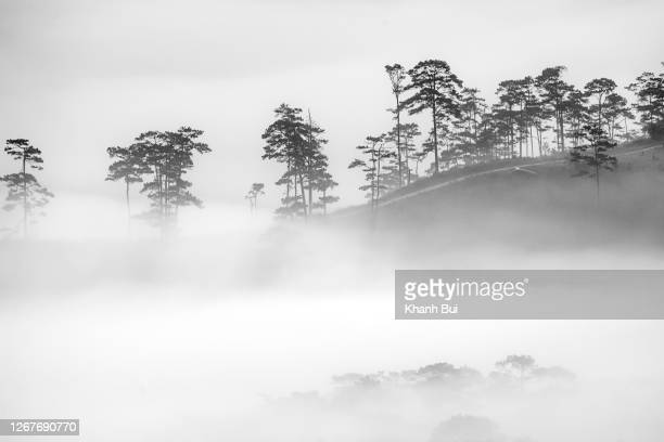 wave fog flow in valley with magic light and dreaming at sunrise - black and white instant print stock pictures, royalty-free photos & images