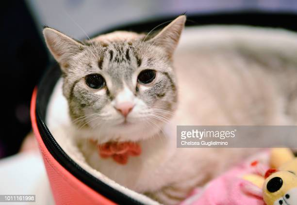Waverly McTinybeans seen at CatCon Worldwide 2018 at Pasadena Convention Center on August 4 2018 in Pasadena California