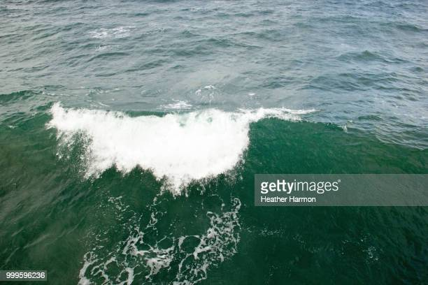 waves from pacific - heather harmon stock pictures, royalty-free photos & images