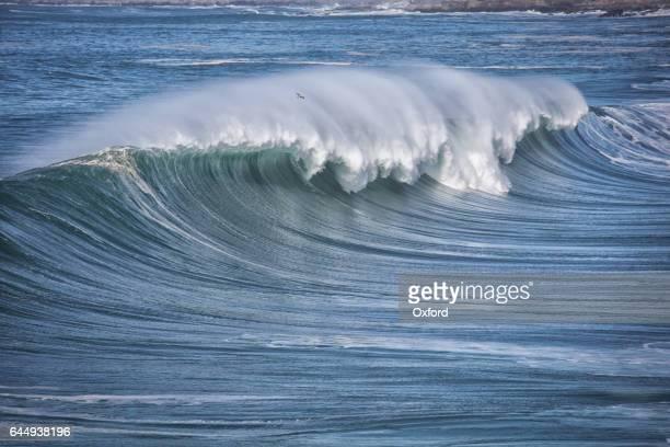 Waves in Pacific Ocean