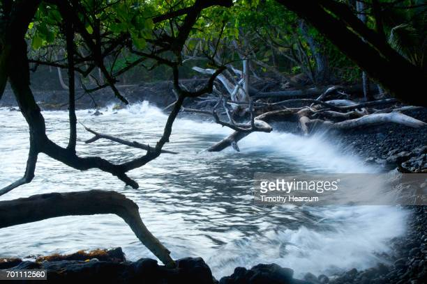 waves lapping against lava rock in a small cove as seen through tree branches - timothy hearsum stock photos and pictures