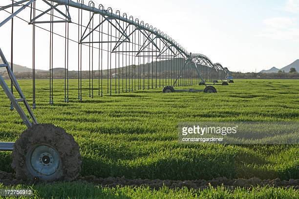 waves of green in the irrigated field - sprinkler system stock pictures, royalty-free photos & images