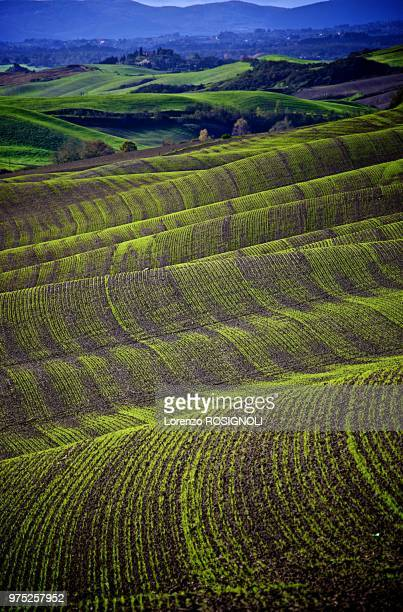 waves of wheat (who judge photos? peoples or dislikers? ... it'a shame!) - who stock pictures, royalty-free photos & images