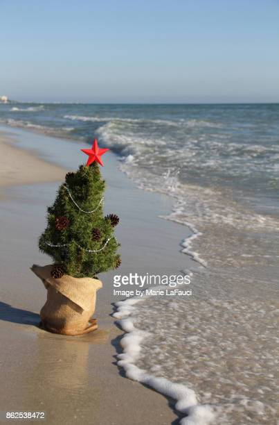 waves reaching towards christmas tree at the beach - marie lafauci stock pictures, royalty-free photos & images