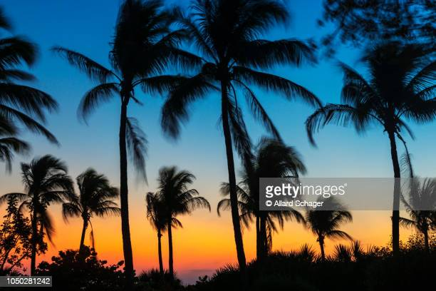 waving palm trees at sunset in fort myers beach florida usa - fort myers beach stock pictures, royalty-free photos & images