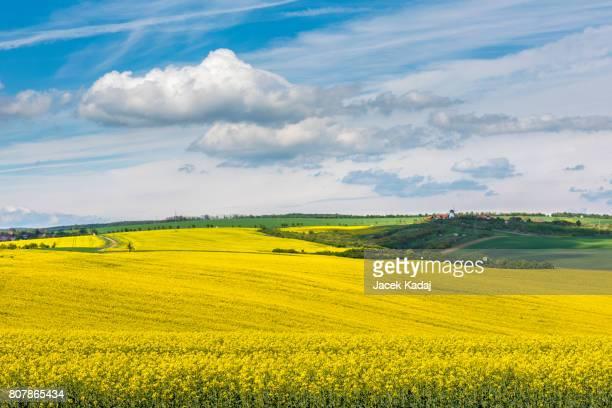 Wavy meadows