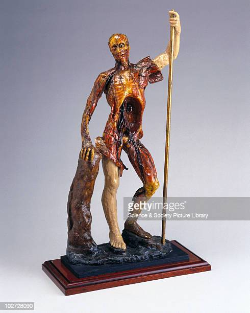 Wax male anatomical figure Italy 175074 Male anatomical figure made of wax 18th century by AM Manzolini of Bologna Italy 175074
