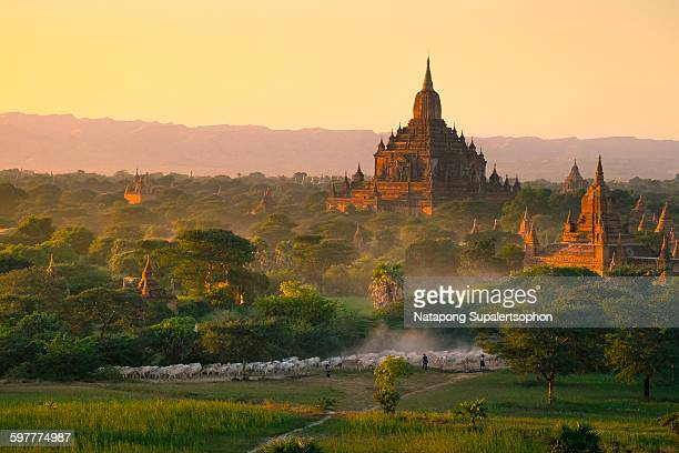 Way of life in bagan
