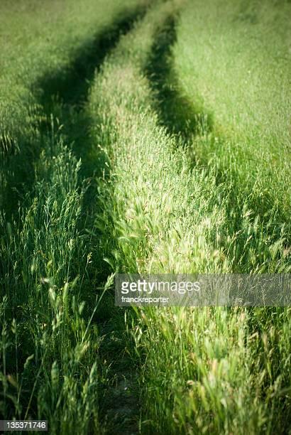 Fahrt Weg im Gras Feld