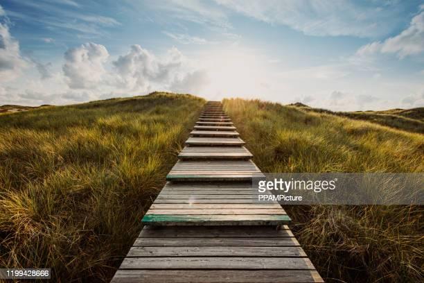 väg genom sanddynerna - utetrappa bildbanksfoton och bilder