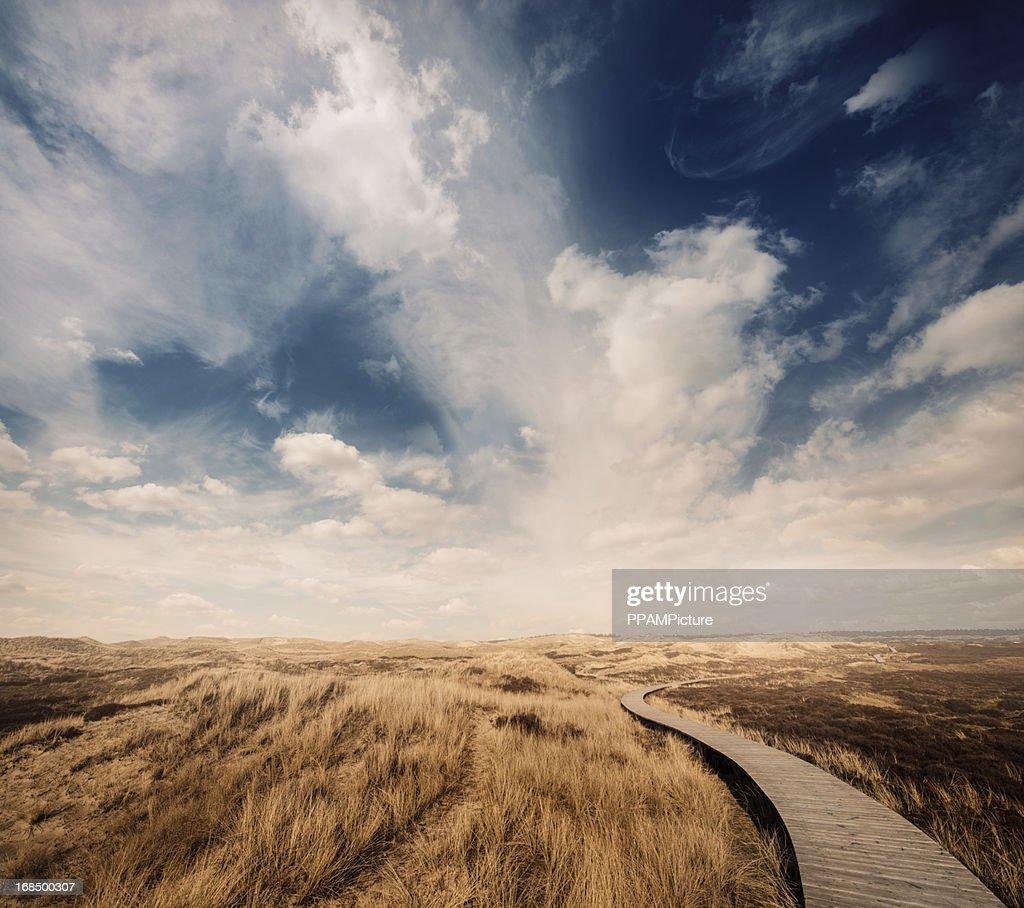 Way through the dunes : Stock Photo