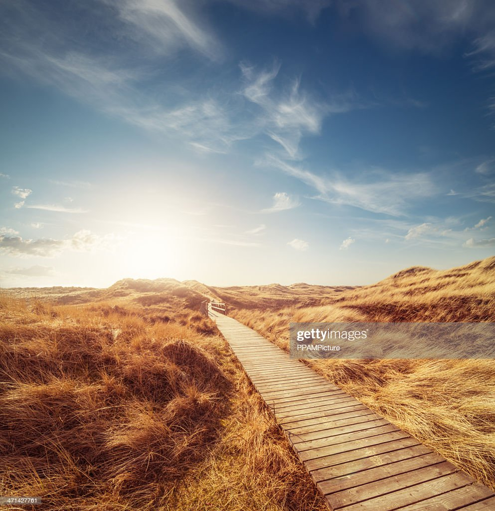 Way through the dunes : Stock Photo