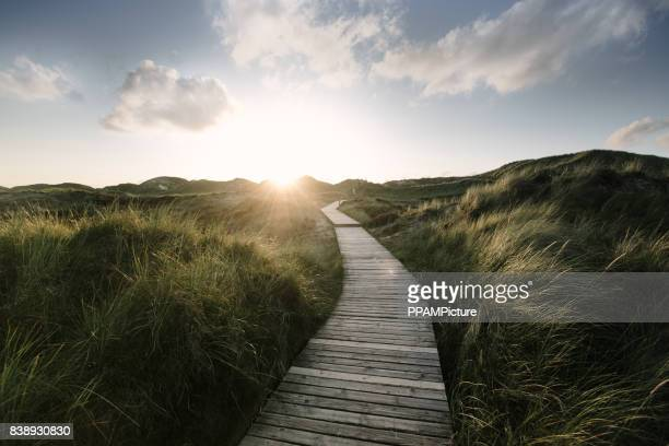 way through the dunes - horizon stock pictures, royalty-free photos & images