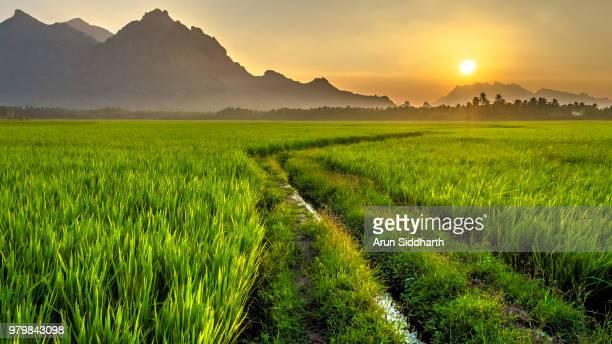 way to rise - paisajes de india fotografías e imágenes de stock