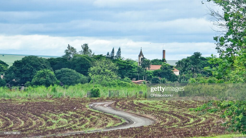 Way to the bucolic village, with church on the scene, amidst the cane plantation. : Stock Photo