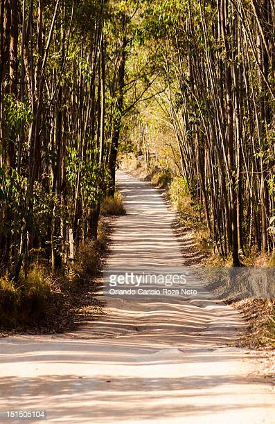 way towards forest - file:the_wyoming,_orlando,_fl.jpg stock pictures, royalty-free photos & images