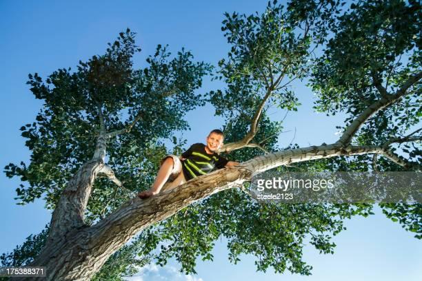 Fahrt In einem Baum