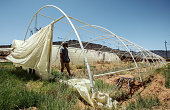melkboom south africa wayne chanti farmers