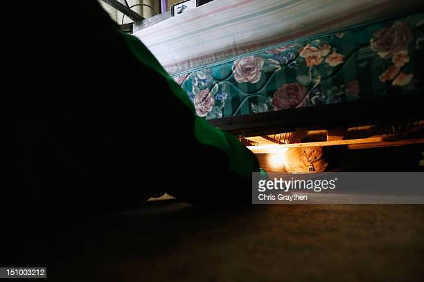 Wayne Fuselier finds his cat hiding under the bed after having to leave the house due to rising flood waters from Hurricane Isaac in the Indigo Lakes...