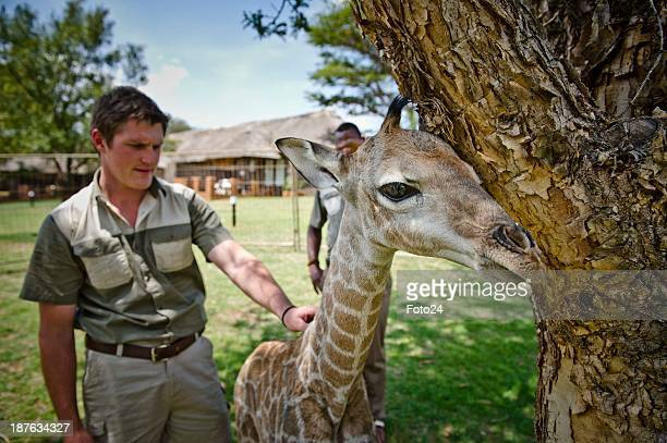Wayne Muller and 'Baby X' at the Krugersdorp Game Reserve on November 6 in Krugersdorp South Africa The 5dayold calf was born prematurely and could...