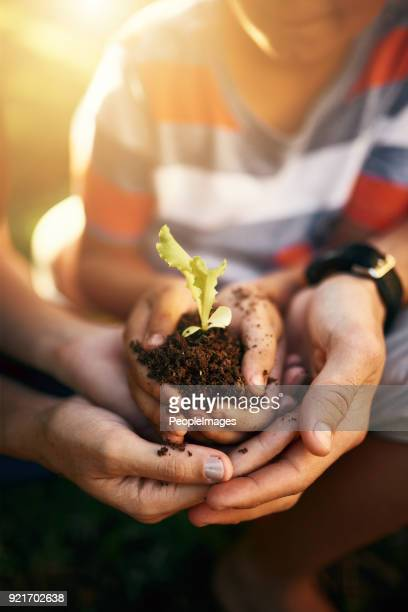 we all need to show some care to the world - seed stock pictures, royalty-free photos & images