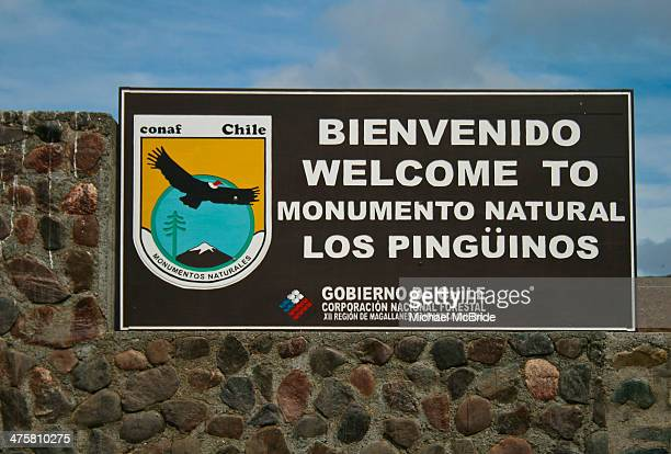 CONTENT] We come to Magdalena Island in the Straits of Magellen out of Punta Arenas Chile It is the largest breeding ground for Magellanic Penguins...