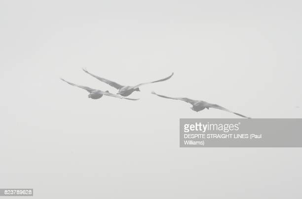 we fly as ghosts - keyhaven stock photos and pictures