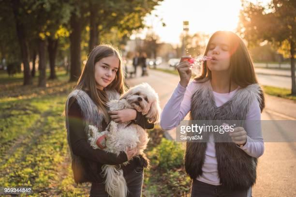 当ホテルでは、楽しい集まり - girl blows dog ストックフォトと画像