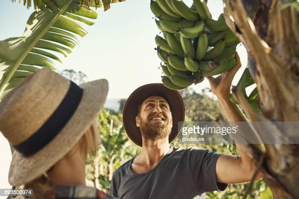 we love a good banana tree  life - banana tree stock pictures, royalty-free photos & images