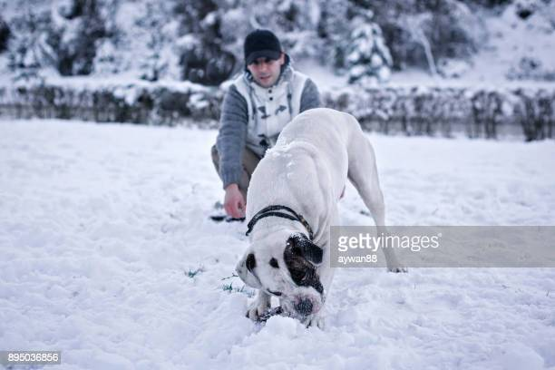 we love winter - american bulldog stock photos and pictures