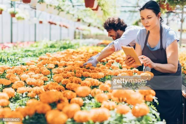 We produce the best marigolds