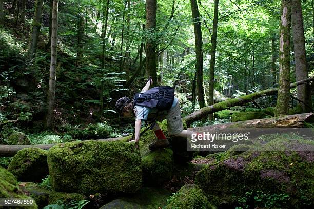 Wearing a peaked cap and small rucksack a young adventurer clambers over rocks in the ancient forest of Monbachtal Bach in Germany's Black Forest...