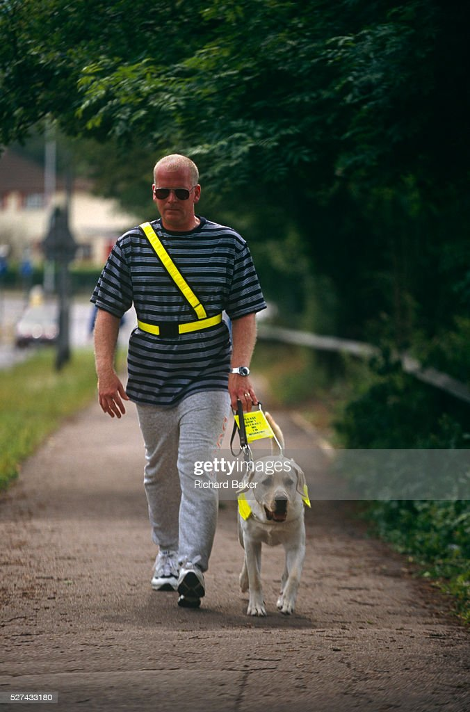 England - Reading - Walking a guide dog puppy : News Photo