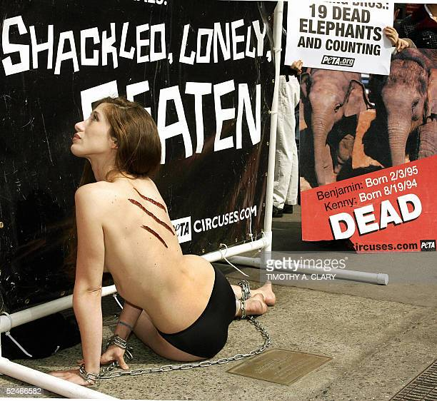 Wearing nothing but shackles and a fake scar Brandi Valladolid of PETA lies in Times Square to protest the arrival of Ringling Brothers and Barnum...