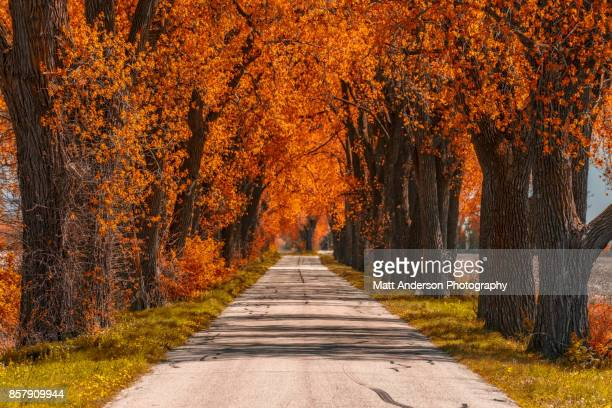 weary road - indiana stock pictures, royalty-free photos & images
