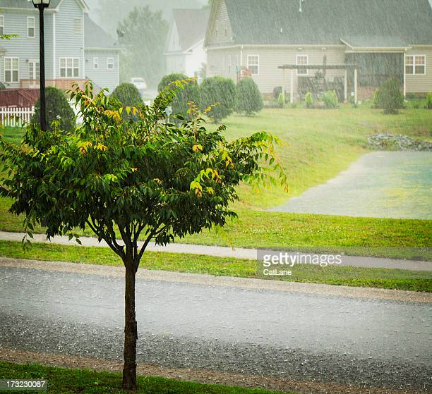 weather: torrential rain during summer storm - torrential rain stock pictures, royalty-free photos & images