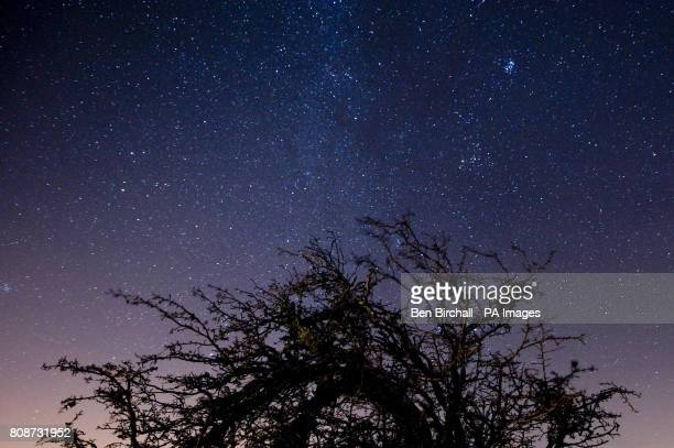 Weathered tree is pictured with the starry night sky over Exmoor National Park.