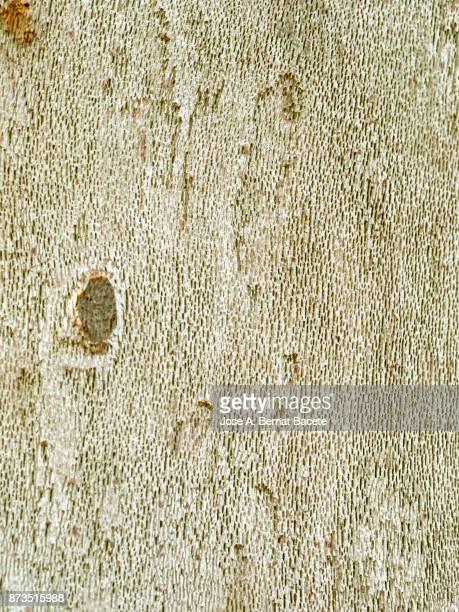 Weathered tree trunk texture, bark of the tree illuminated by sunlight.