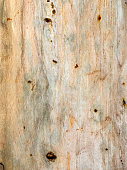 https://www.istockphoto.com/photo/birch-bark-natural-texture-background-gm801264152-129931077