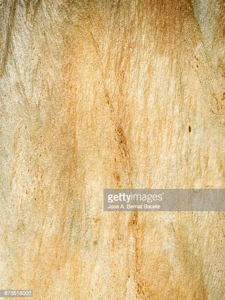 weathered tree trunk texture, bark of the tree illuminated by sunlight. - tronc d'arbre photos et images de collection