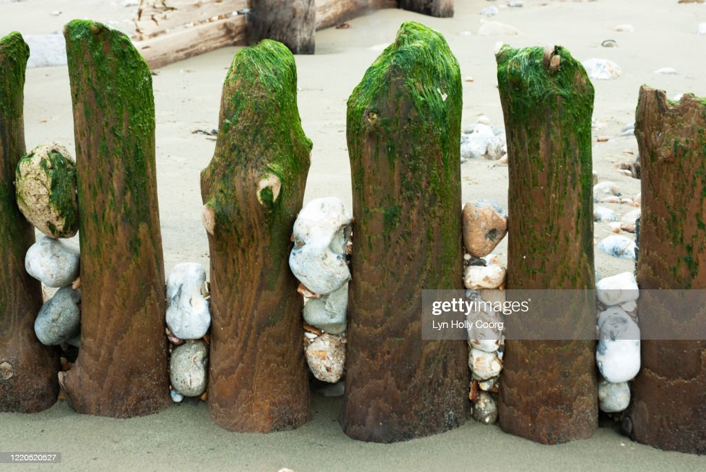 Weathered wooden beach groynes with pebbles : Stock Photo