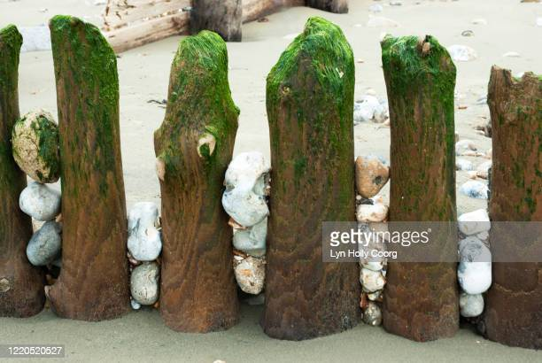 weathered wooden beach groynes with pebbles - lyn holly coorg stock pictures, royalty-free photos & images