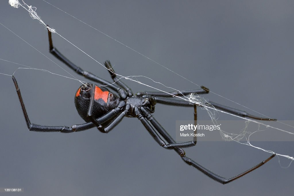 Weaving the Web : Stock Photo