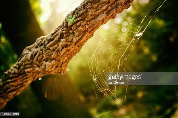 Web in Light