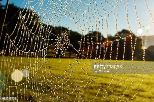 web of tears - spider silk stock photos and pictures