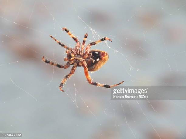 web weaver - noreen braman stock pictures, royalty-free photos & images