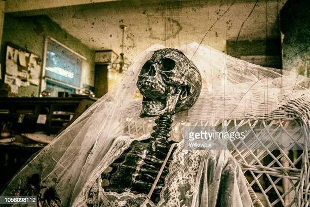 wedding bride skeleton wearing bridal veil and honeymoon lingerie - funny skeleton stock photos and pictures